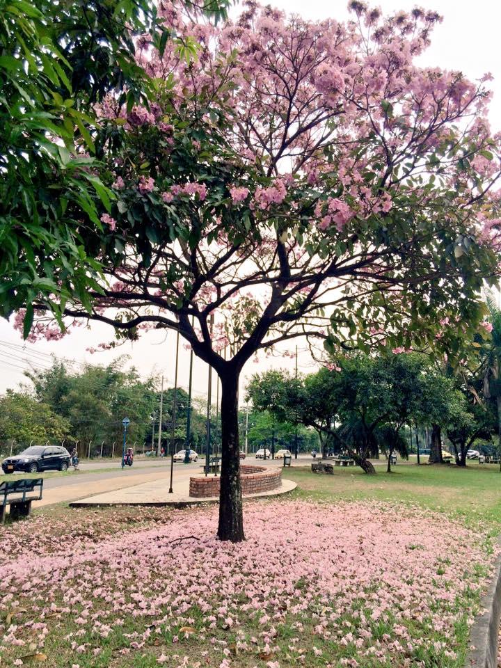Uno de los árboles bonitos que observó Jimena en su Día Despacio